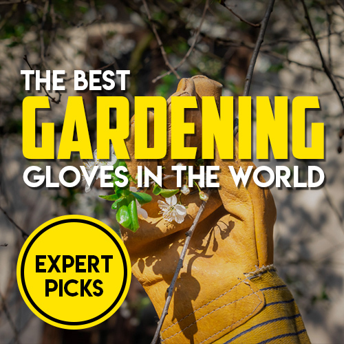 Find the Best Gardening Gloves Today