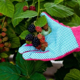 Bramble Gloves