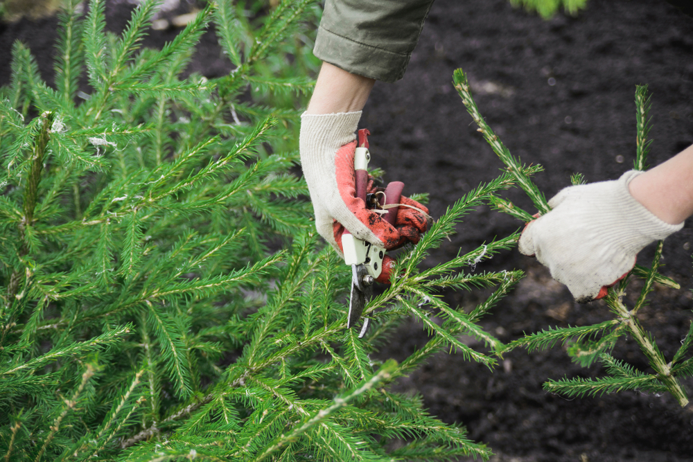 The Right Gloves Can Protect Against Christmas Tree Needles