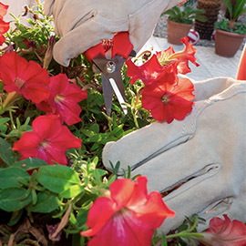 Professional Florist Gloves