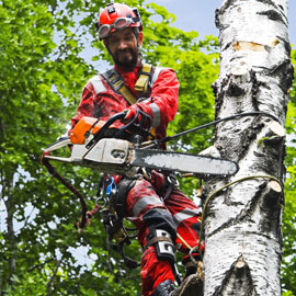 Tree Surgeon Gloves