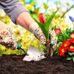 Click Here for Planting Gloves