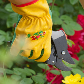 Click Here for Thorn Proof Gloves