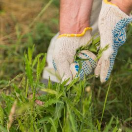 Click Here for Weeding Gloves