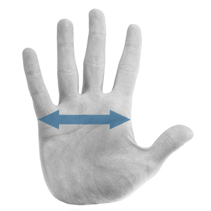 How To Measure Your Hand For HPC Healthline Gloves
