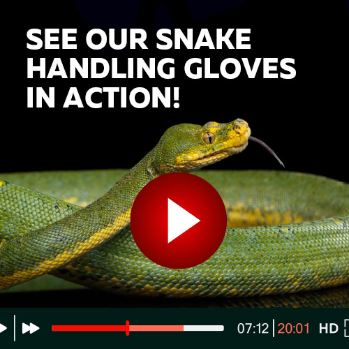 See Our Snake Handling Gloves in Action